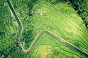 Aerial landscape view of rice fields.