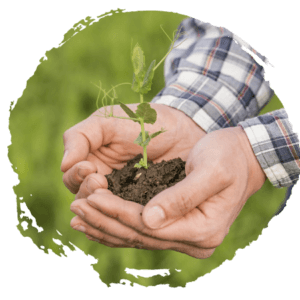 holding soil and a plant